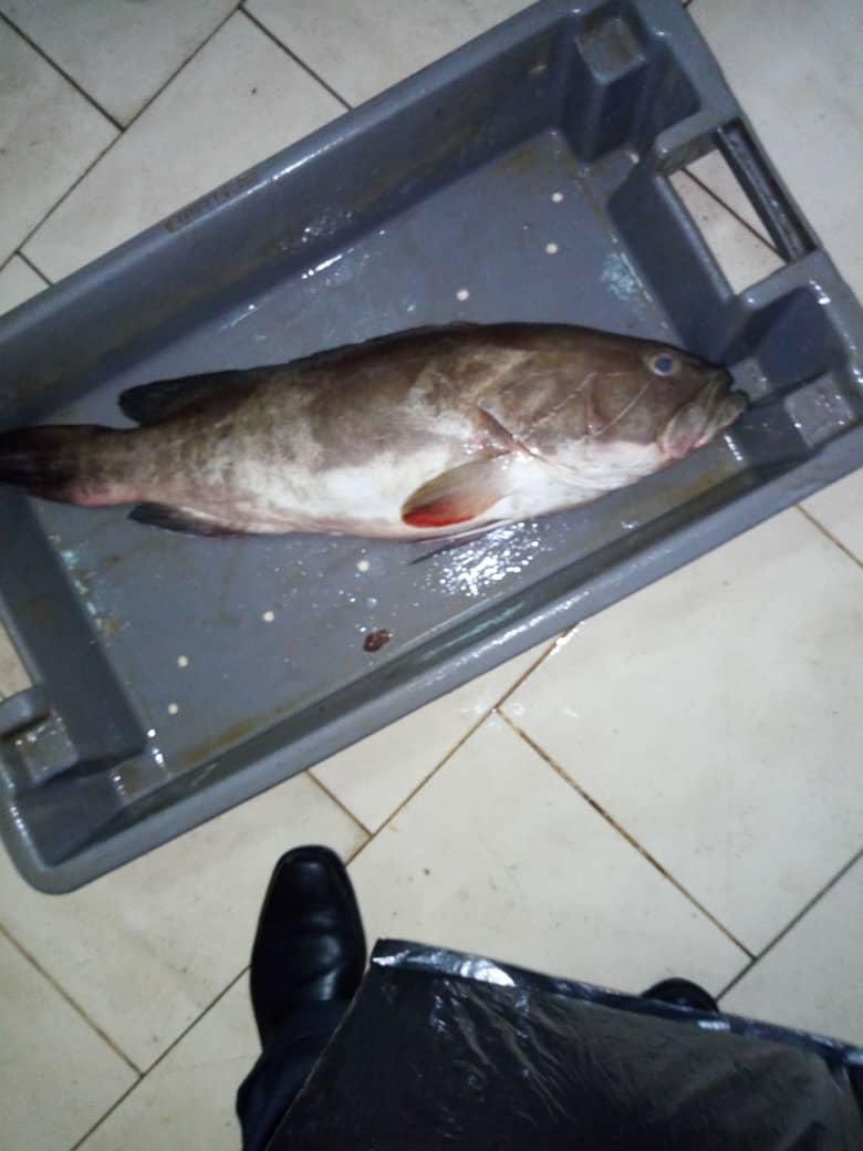 FISHERY